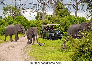 Elefant Safari (Botswana)