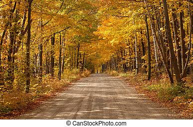 fahrbahn, landschaftlich, bewaldet, einstellung, land