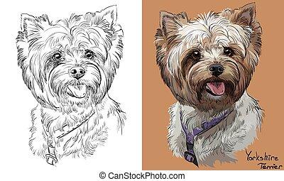 Farbige und monochrome Handzeichnung Vektorporträt von Yorkshire Terrier.