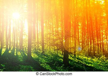 Farbiger mystischer Wald mit Sonnenstrahl am Morgen