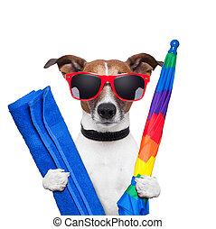 feiertage, hund, sommer