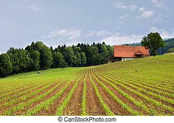 felder, landwirtschaft