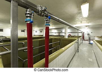 fermenting, teich