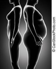 Fetter und dünner Frauenvergleich