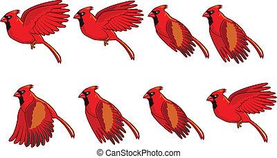 fliegendes, animation, kardinal, vogel