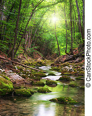 Fluss tief im Bergwald