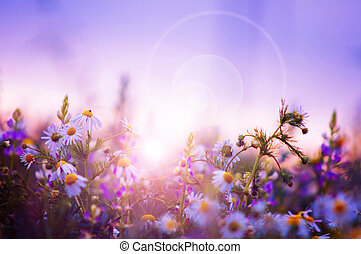 Frühlingsblumenfeld