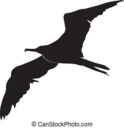 Frigate-Vogel