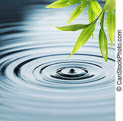 Frische Bambusblätter über Wasser
