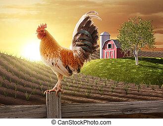 Frische Farm