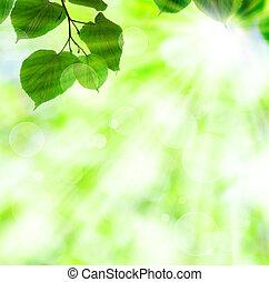 fruehjahr, blätter, sonne, grün, balken