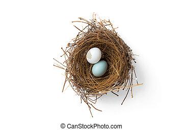 Gebrochene Eier im Vogelnest.