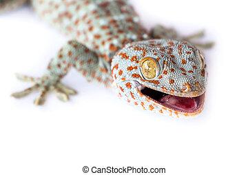 Gecko Portrait.