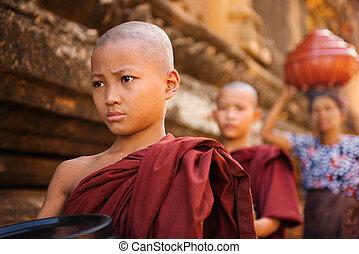 gehen, buddhist, mönche, junger, südöstlich asiat, almosen, morgen