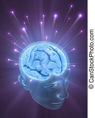 Gehirn (Die Kraft des Geistes)