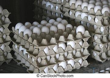 gesammelt, eier, frisch