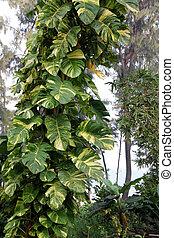 gewachsen, nicely, kriechpflanze, unterstuetzung, money-plant, baum, wie, groß, hat, trunk.