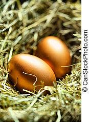 Goldeier im Nest