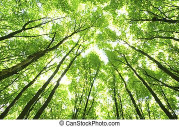 Grüne Bäume im Hintergrund