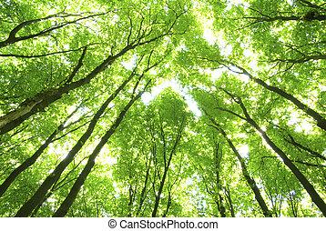Grüne Bäume