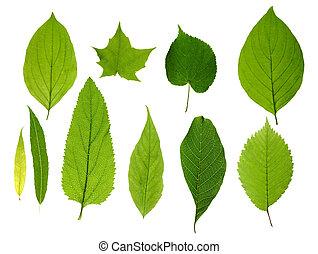 Grüne Blätter isoliert