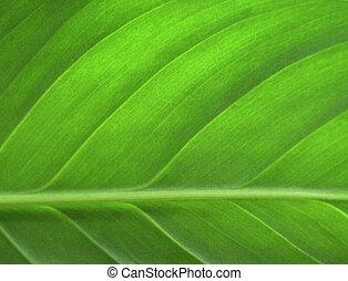 Grünes Blatt schließen
