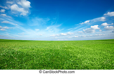 Grünes, frisches Gras unter blauem Himmel.