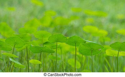 Grünes Geld, Blätter