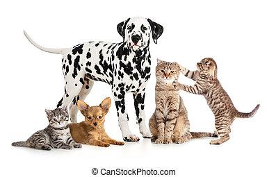 gruppe, collage, veterinär, freigestellt, petshop, haustiere, tiere, oder