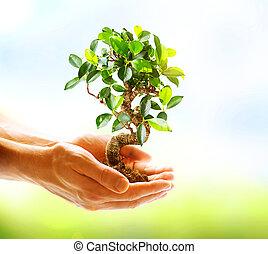 hände, besitz, aus, hintergrund, grün, menschliche , natur, pflanze