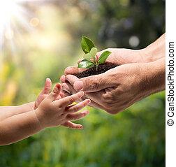 Hände eines Kindes, das eine Pflanze nimmt.