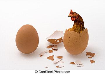 Hühnchen oder Ei