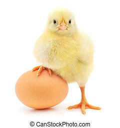 Hühnchen und Ei.