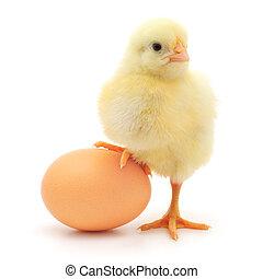 Hühnchen und Ei