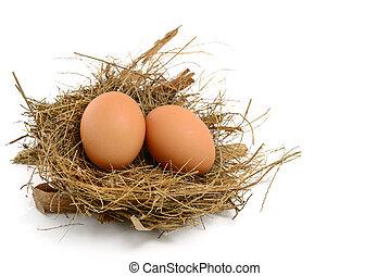 Hühnereier im Nest.