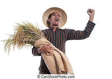 hand, reis, besitz, angehoben, landwirt, glücklich, aufgeregt, traditionelle