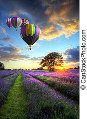 Heiße Luftballons fliegen über Lavendellandschaft Sonnenuntergang