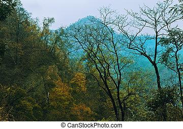 herbst, berge, landschaftsbild, wald, gelber