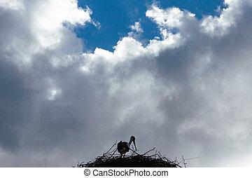 hintergrund, storchennest, wolkenhimmel