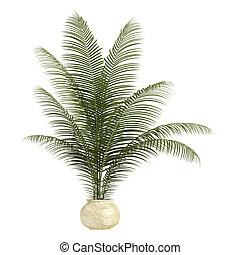 houseplant, handfläche, areca