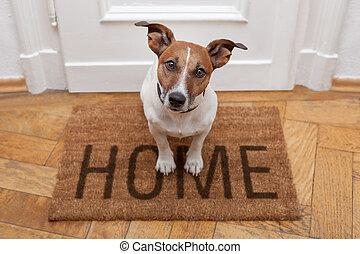 Hund willkommen zu Hause
