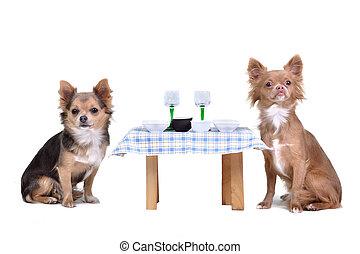 Hunde genießen ihr Essen
