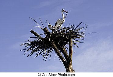 In einem Nest gegen den Himmel.