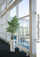 Indoor tree, near the large glass windows Donetsk airport on March 2, 2013.