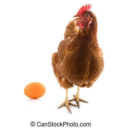 Isoliertes Hühnchen mit Ei