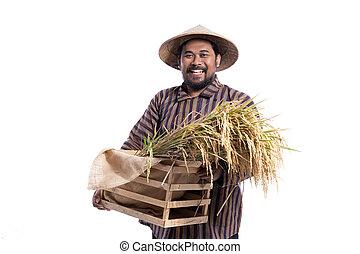 javanese, reis, korn, tuch, besitz, landwirt, traditionelle