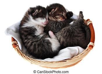 Kätzchen im Korb