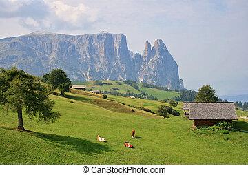 Kühe und der Bergschlepper.