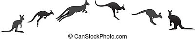 Kangaroo auf verschiedenen Stufen