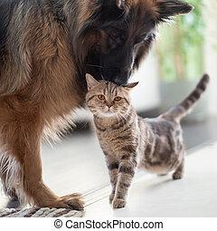 Katze und Hund zusammen. Freundschaft zwischen Haustieren.